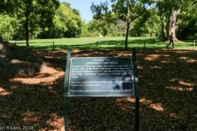 Camphor tree sign