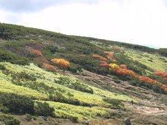 日本で最も早い旭岳の紅葉