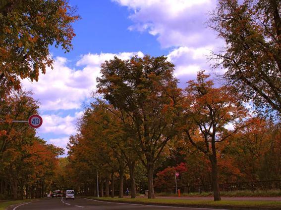 五輪橋通り。紅葉には少し早い。