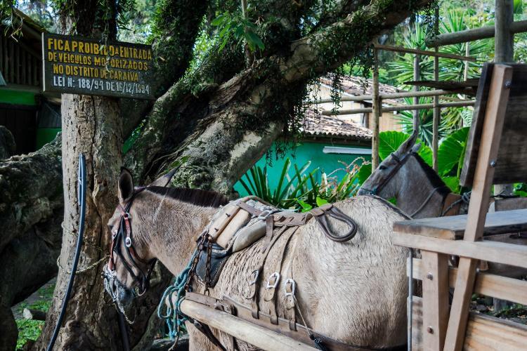 Transporte animal em caraíva