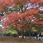 秋の休日と来年への準備