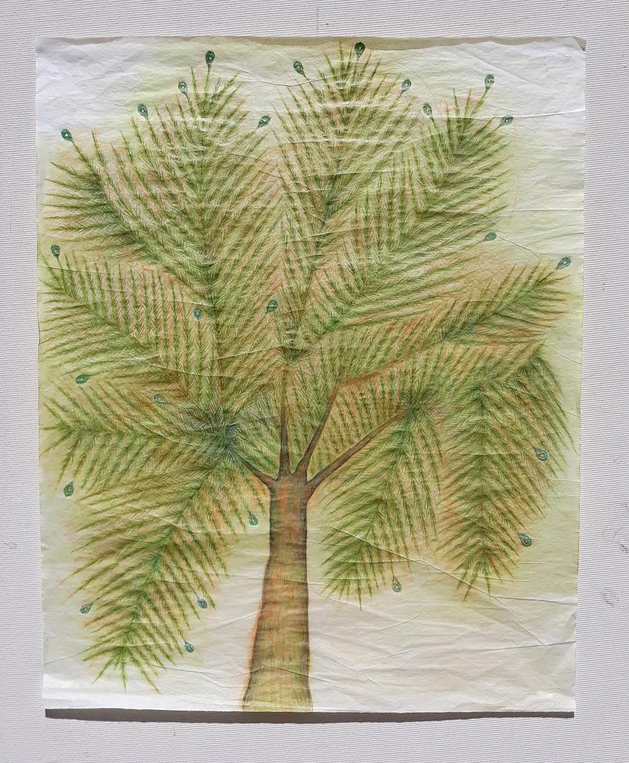 인도의 나무