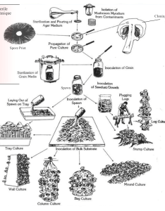 Overview of mushroom cultivation chart also growing mushrooms at home north american mycological association rh namyco