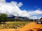En-route to the vineyards of Stellenbosch