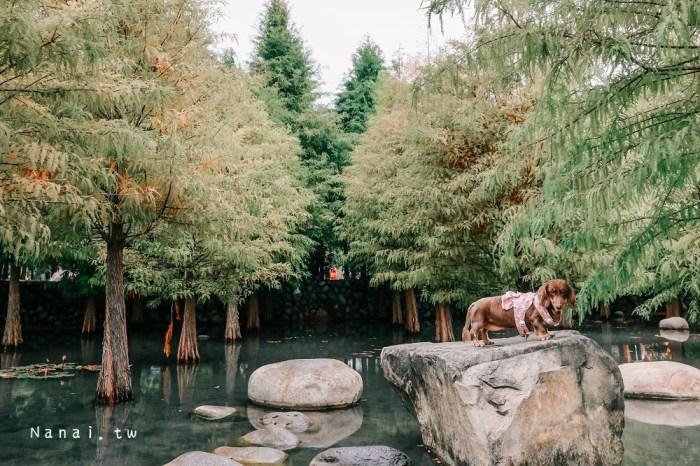 台中后里泰安羽粼落羽松,季節限定 濃濃北國風情超美拍,寵物友善