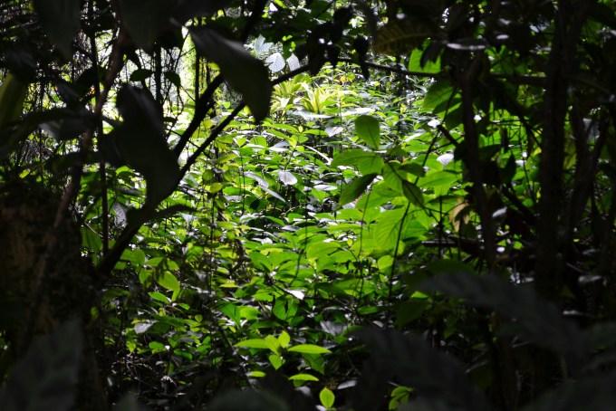 sunlight-through-leafs-175690_1920