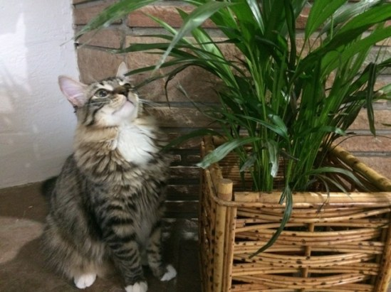smelling-plant