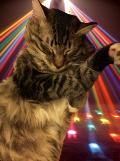 disco cat resized