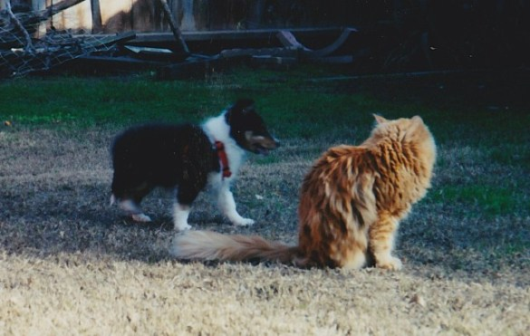 Skippy and Scamper meeting