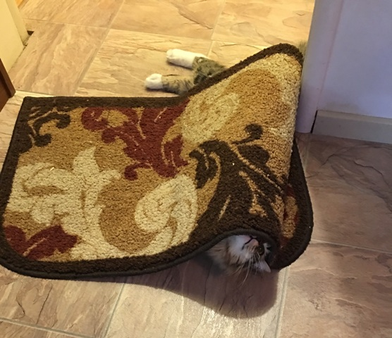 playing under rug