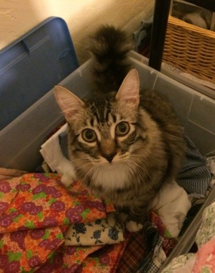 foster in fabric