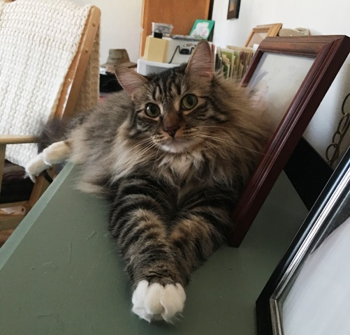 crossed paws 2