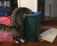looking in wastebasket 2