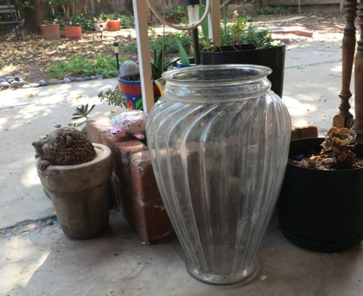 vase in back yard
