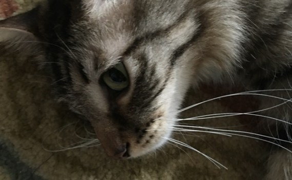 whiskers 2