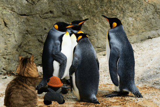 a seeing penguins