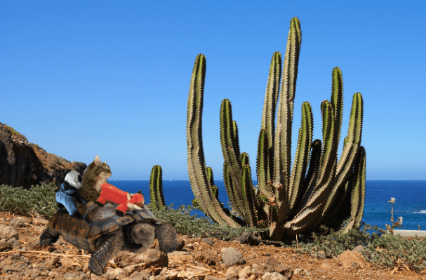 cactus at beach a