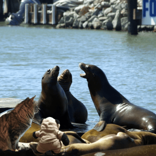 a seals meeting