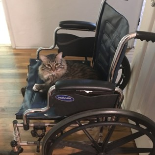 wheelchair 1