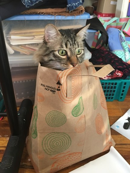 cat out of bag