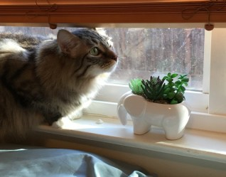 Foster with plant