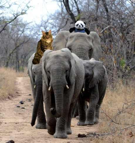 a riding on elephants