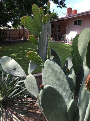 cactus from back