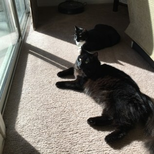 inky and maggie in sun
