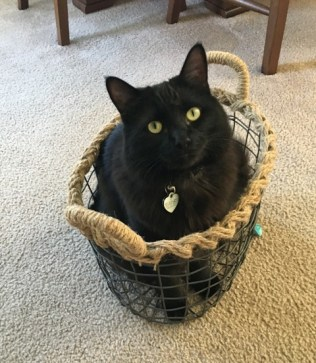 inky in basket2