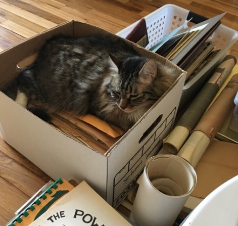 nap on box