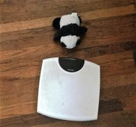 panda-by-scale