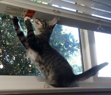 on-other-windowsill