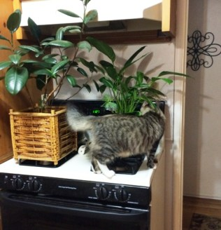 plants-on-stove
