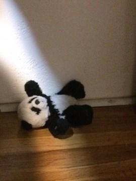 panda in sun