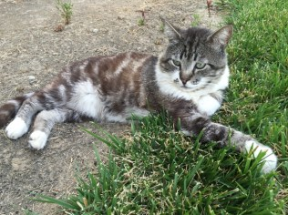 tom cat outside