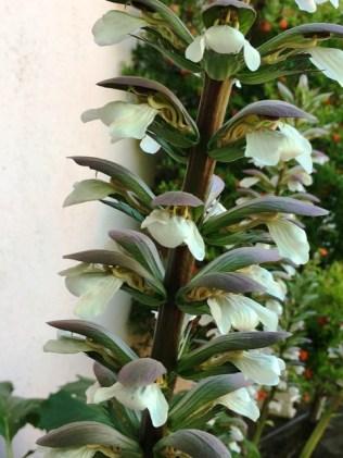 flower up close 2