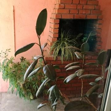 outside plants