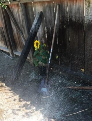 with sprinkler