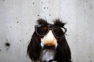 犬のいたずら-夢野久作-イメージ