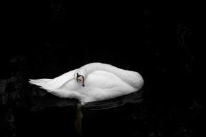 六羽の白鳥-グリム童話-イメージ