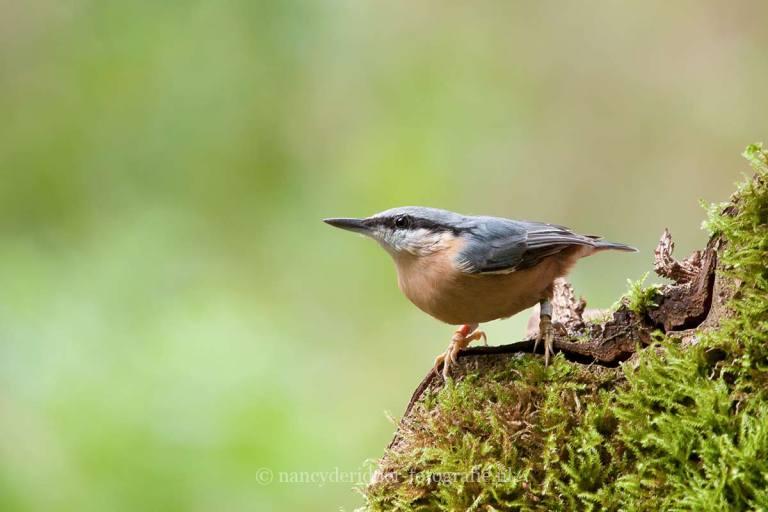 - overige vogels -