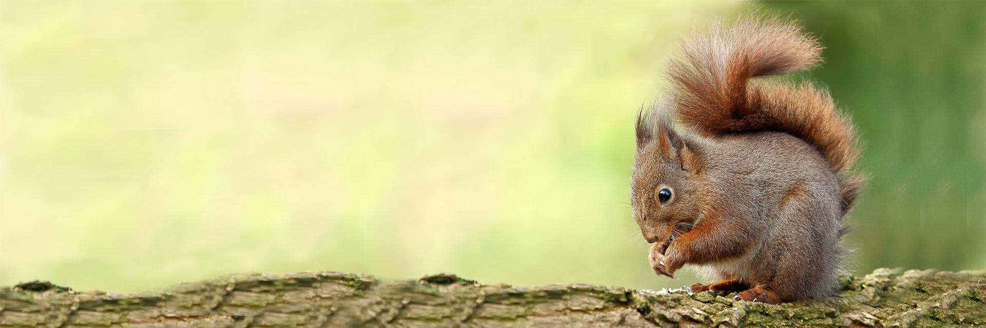dieren in de vrije natuur, eekhoorns, vossen, ijsvogels, uilen, roofvogels, puffins, insecten, vlinders, libellen, rupsen