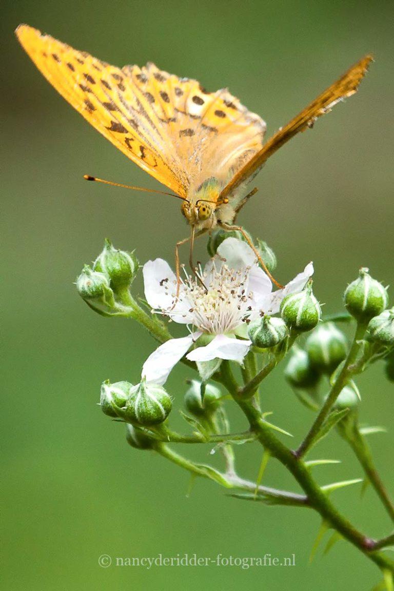 - rupsen en vlinders -