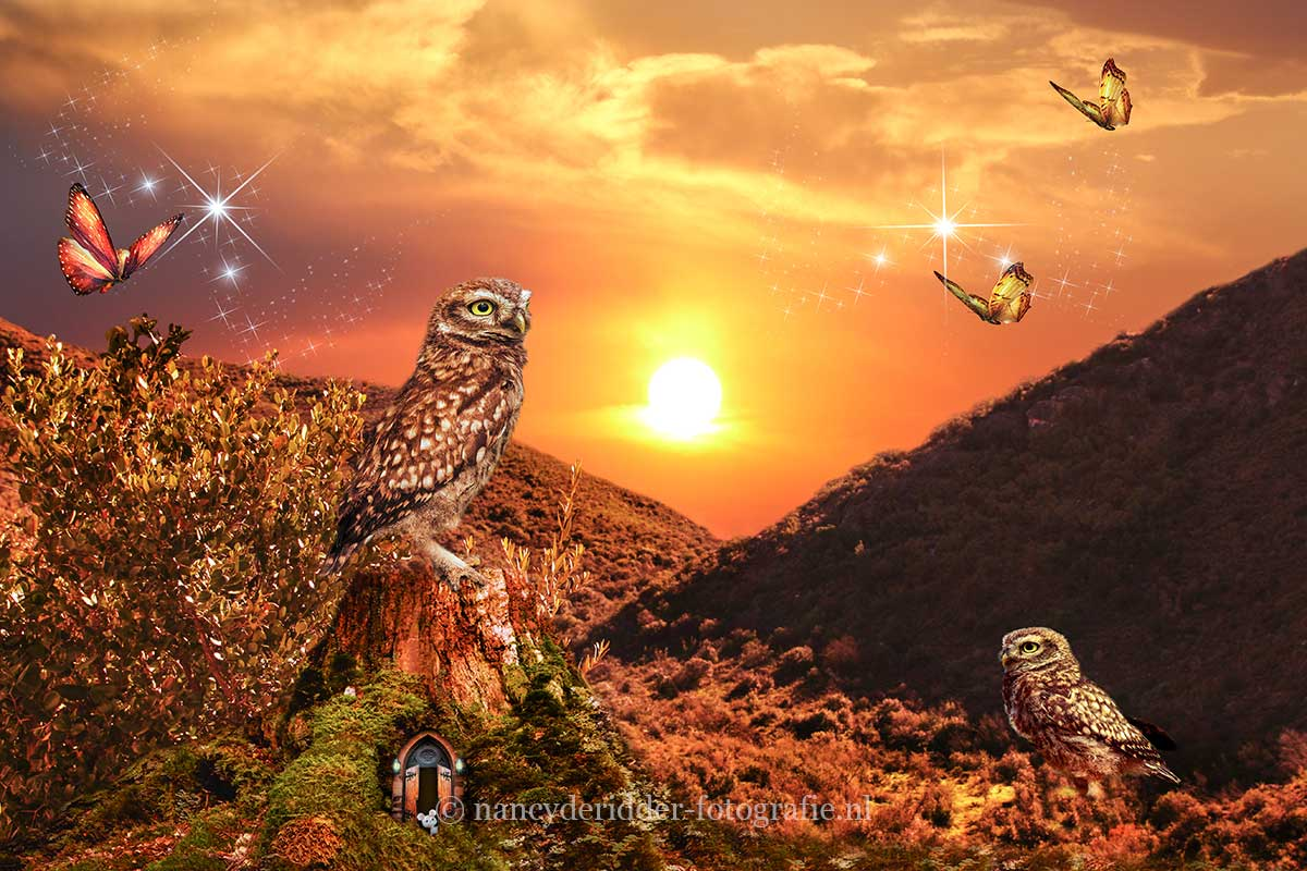 Owls Fantasy World