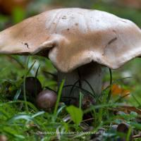 - paddenstoelen -