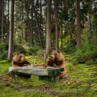Ik zag 2 beren....