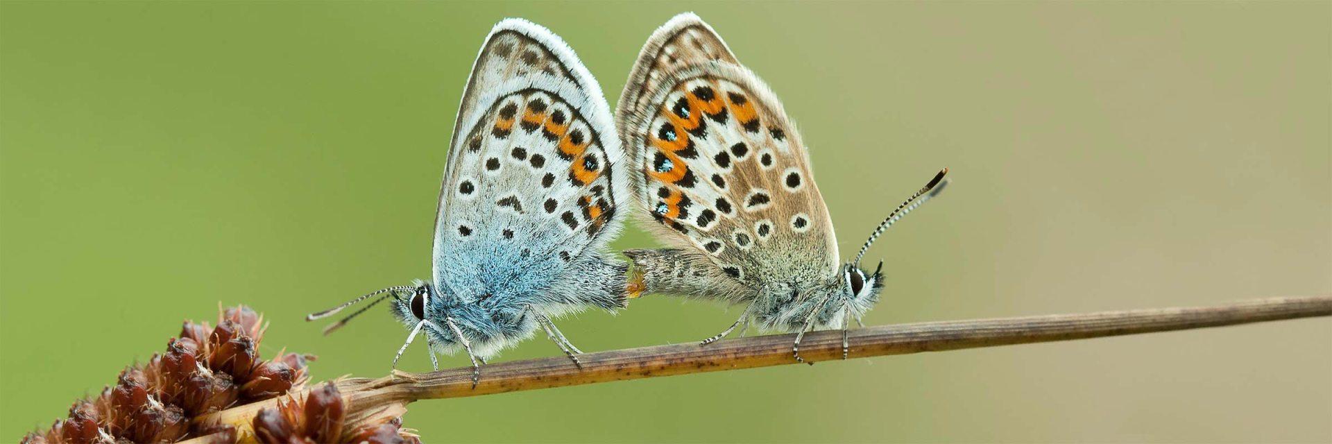 macrosfotografie, rupsen, vlinders, libellen
