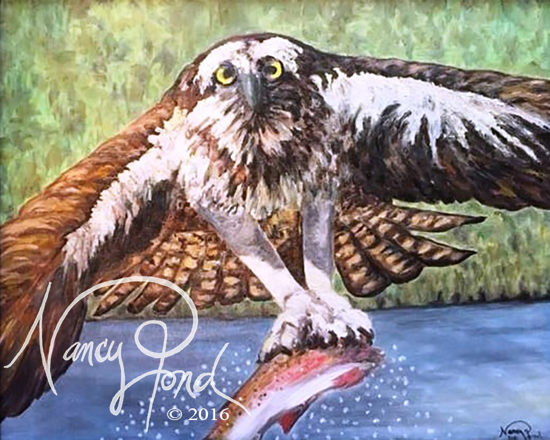 """Osprey"" Oil on Canvas (2009 11x14 -- In Private Collection)"