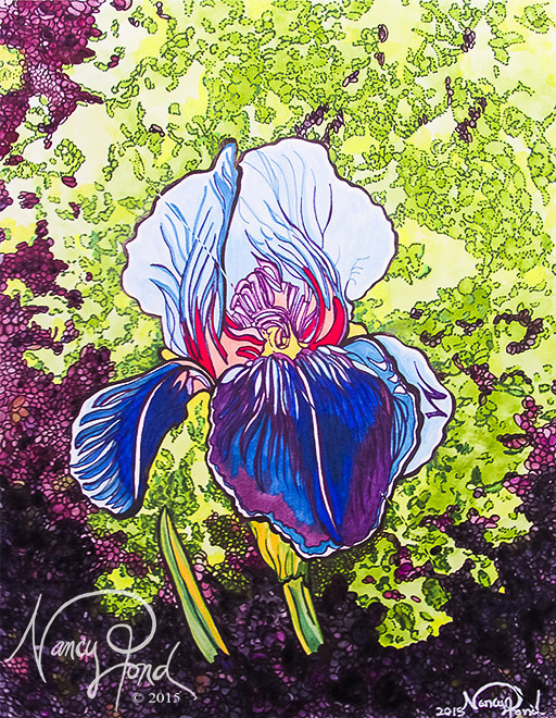 """Iris"" Watercolor and Ink on Paper (2015 11x14)"