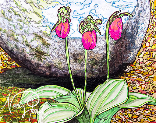 """""""NH Lady Slippers"""" Watercolor and Ink on Paper (2015 11x14)"""